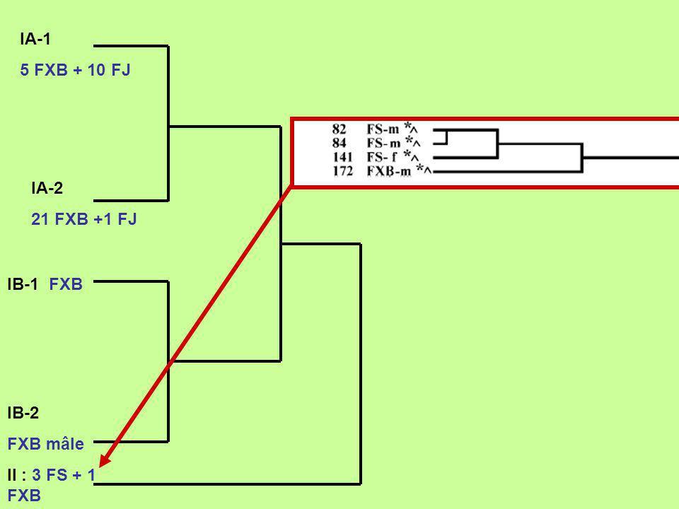 IA-1 5 FXB + 10 FJ IA-2 21 FXB +1 FJ IB-1 FXB IB-2 FXB mâle II : 3 FS + 1 FXB