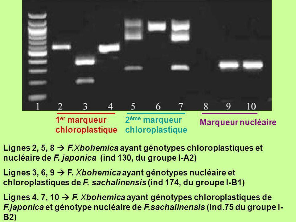 1er marqueur chloroplastique