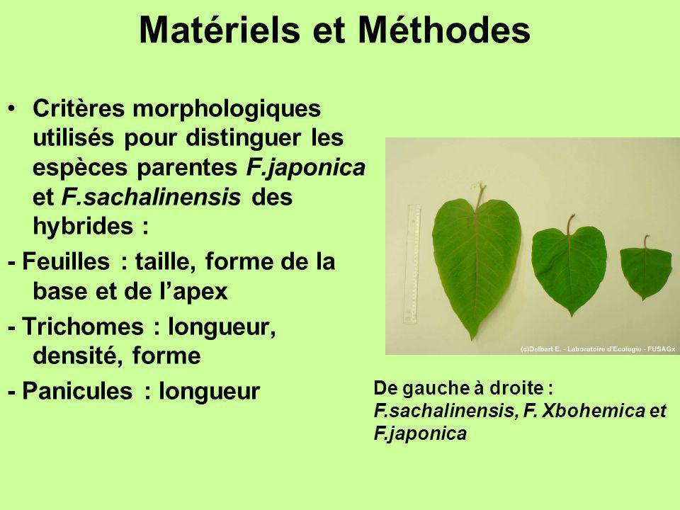 Matériels et Méthodes Critères morphologiques utilisés pour distinguer les espèces parentes F.japonica et F.sachalinensis des hybrides :