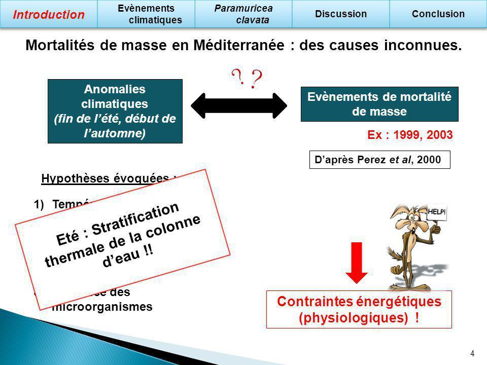 Mortalités de masse en Méditerranée : des causes inconnues.