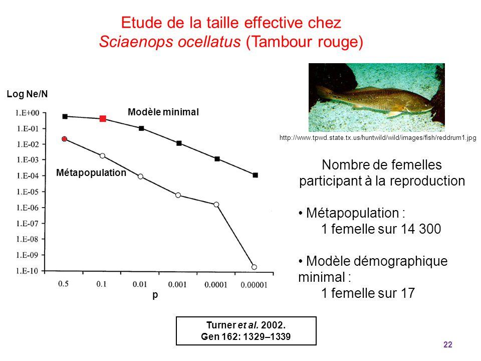 Etude de la taille effective chez Sciaenops ocellatus (Tambour rouge)