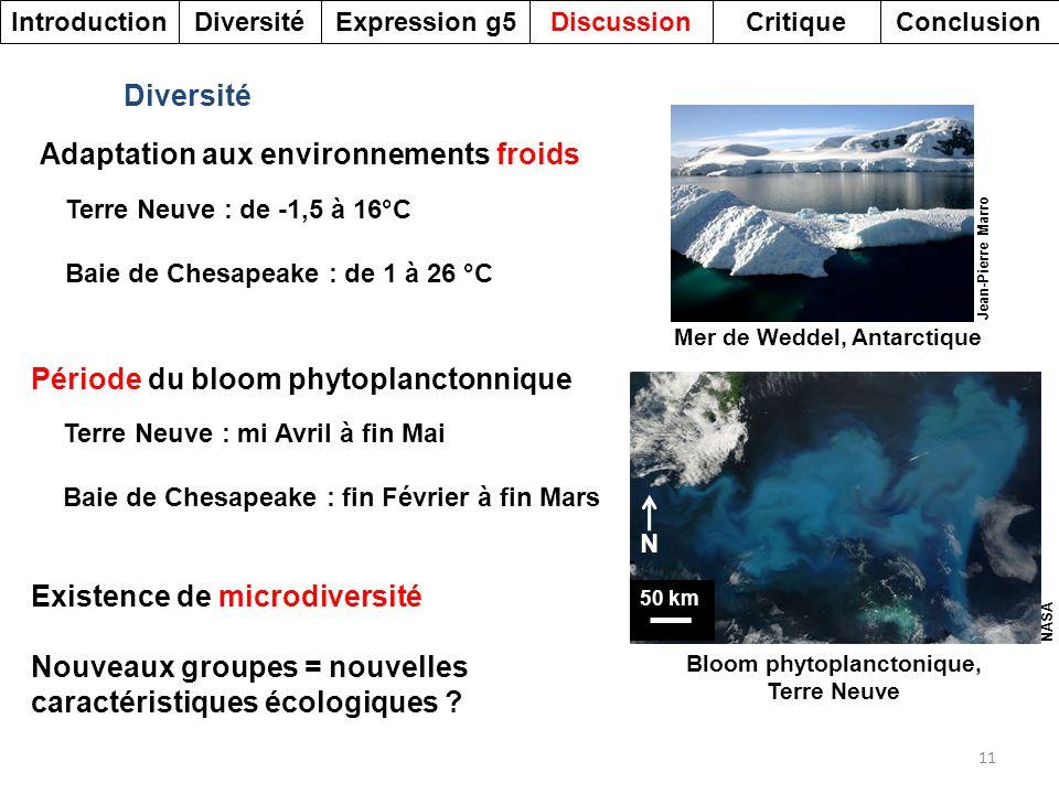 Bloom phytoplanctonique, Terre Neuve