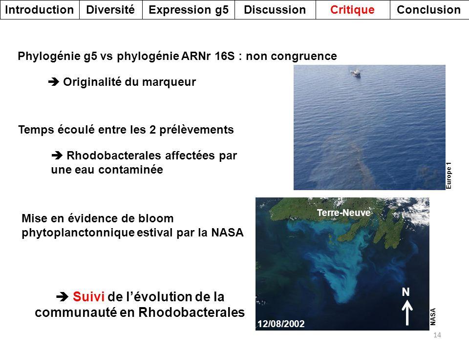 Suivi de l'évolution de la communauté en Rhodobacterales