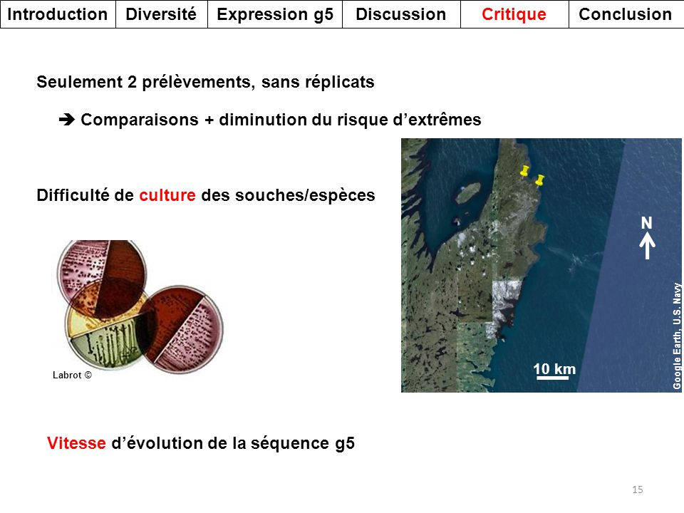 Introduction Diversité Expression g5 Discussion Critique Conclusion