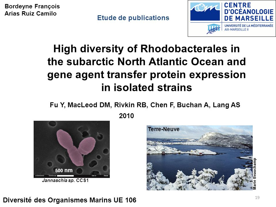 High diversity of Rhodobacterales in