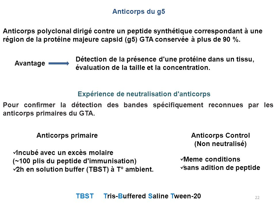 Anticorps du g5