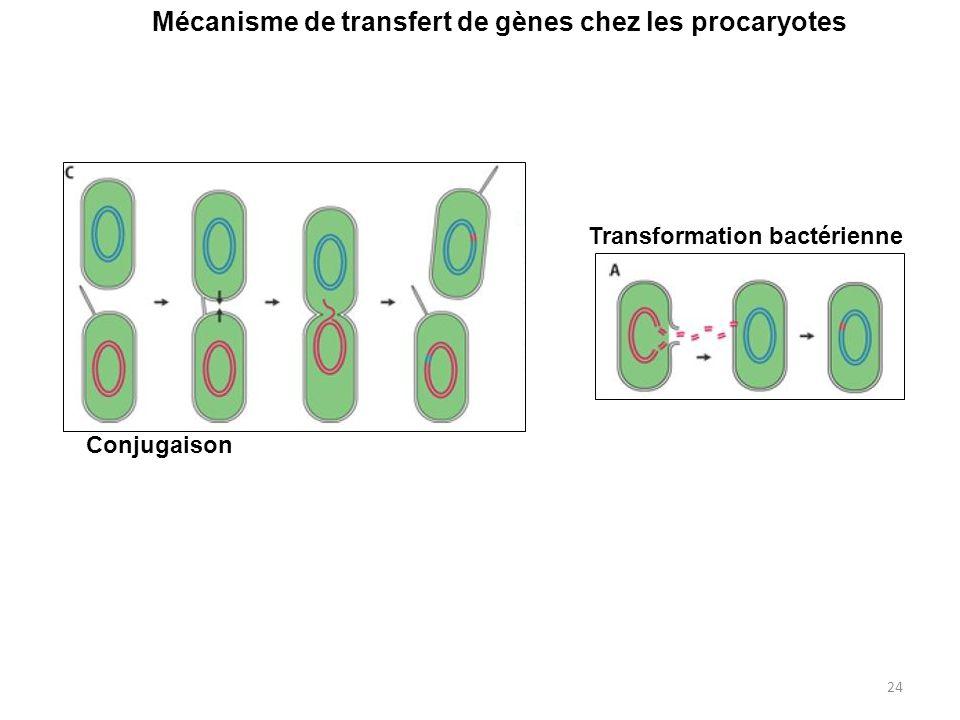 Mécanisme de transfert de gènes chez les procaryotes