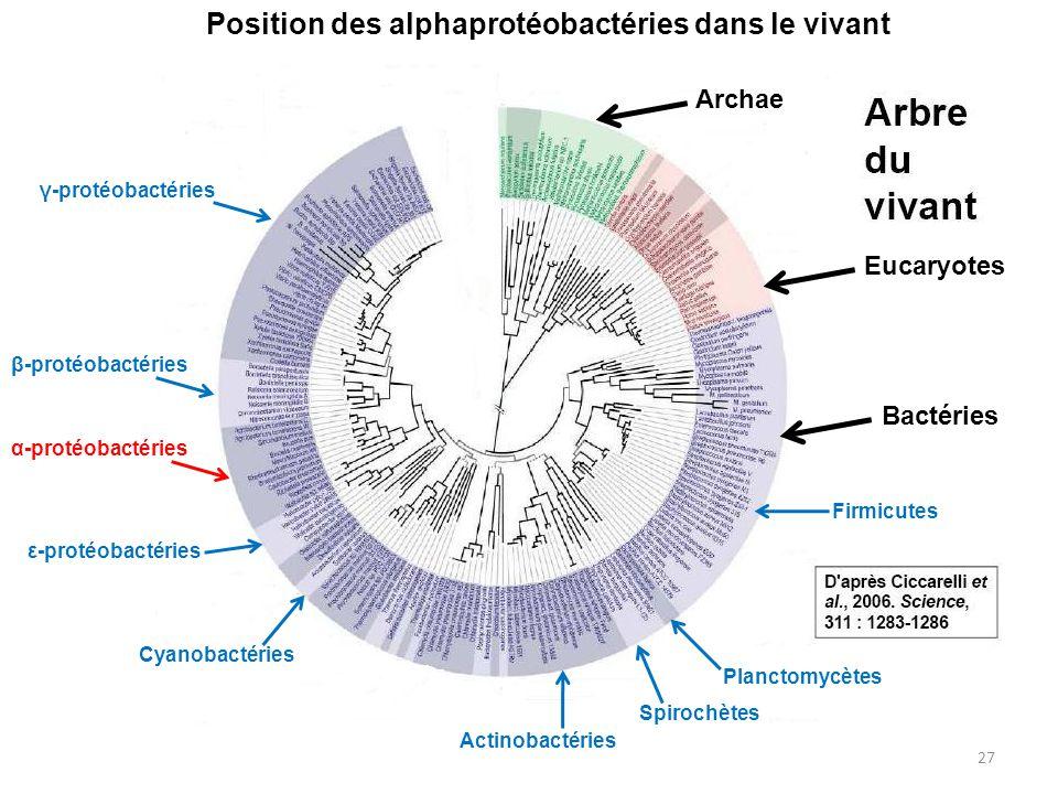 Position des alphaprotéobactéries dans le vivant