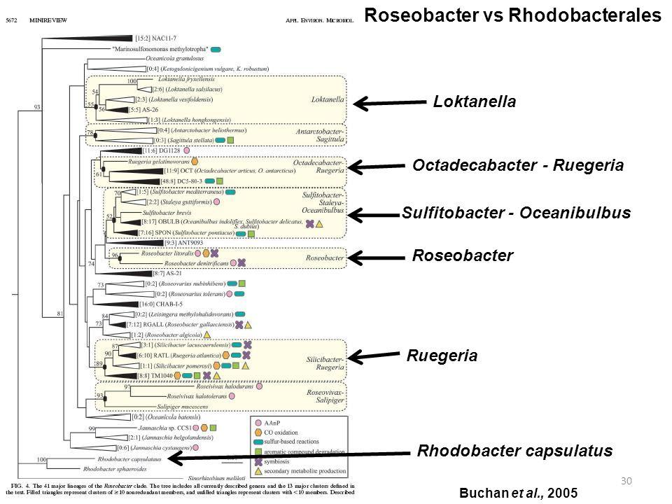 Roseobacter vs Rhodobacterales