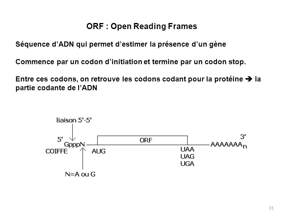 ORF : Open Reading Frames