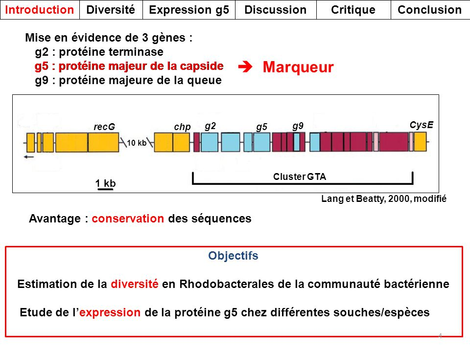  Marqueur Introduction Diversité Expression g5 Discussion Critique