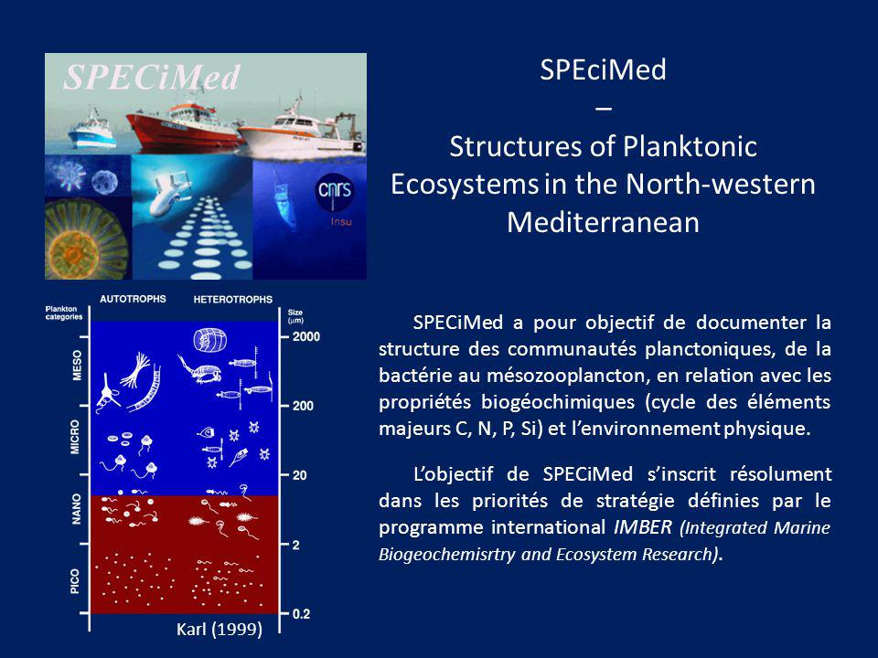 Structures of Planktonic Ecosystems in the North-western