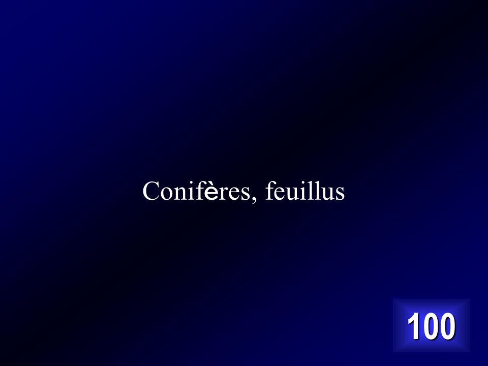 Conifères, feuillus 100