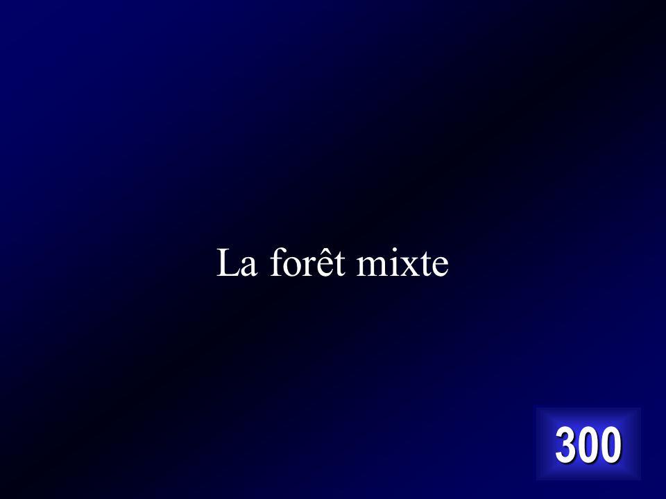 La forêt mixte 300