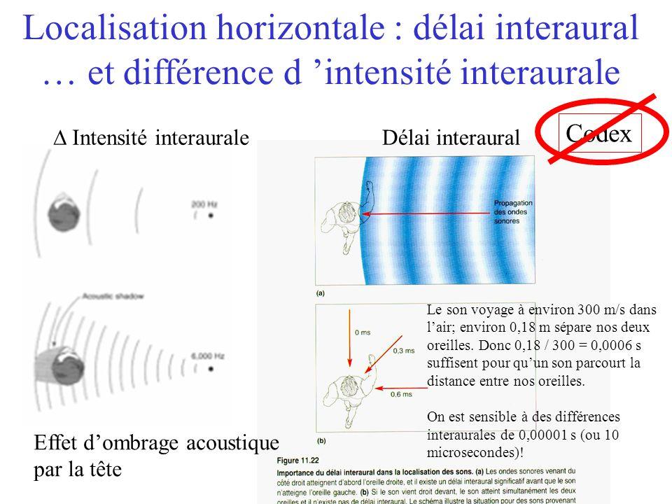 Localisation horizontale : délai interaural … et différence d 'intensité interaurale
