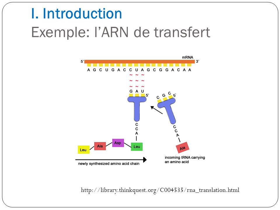 I. Introduction Exemple: l'ARN de transfert