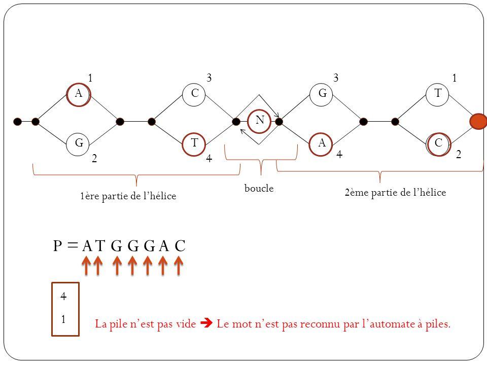 1 3. 3. 1. A. C. G. T. N. G. T. A. C. 4. 2. 2. 4. boucle. 2ème partie de l'hélice.