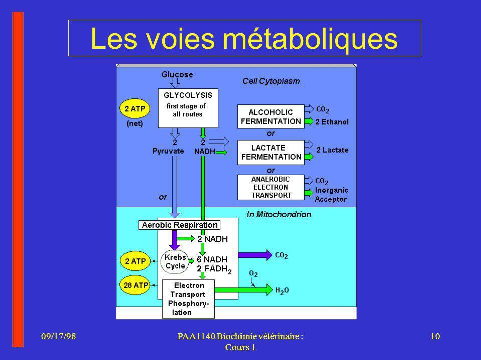 Les voies métaboliques