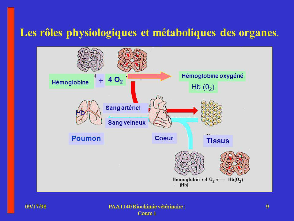 Les rôles physiologiques et métaboliques des organes.