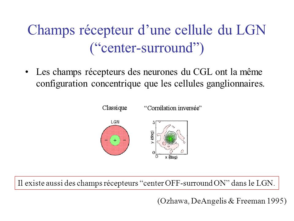 Champs récepteur d'une cellule du LGN ( center-surround )