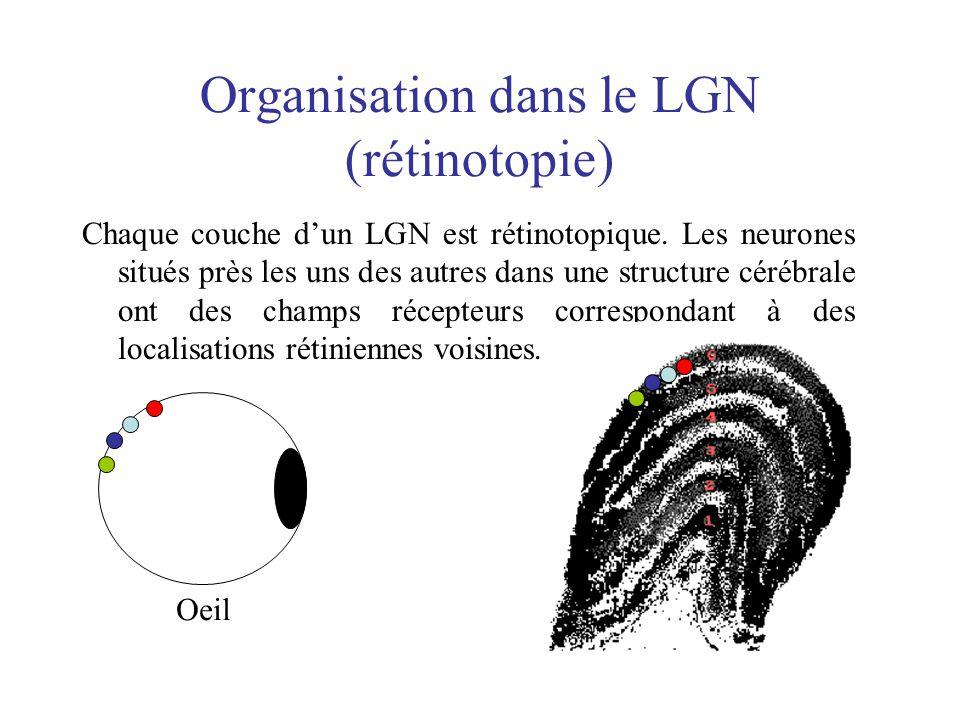 Organisation dans le LGN (rétinotopie)