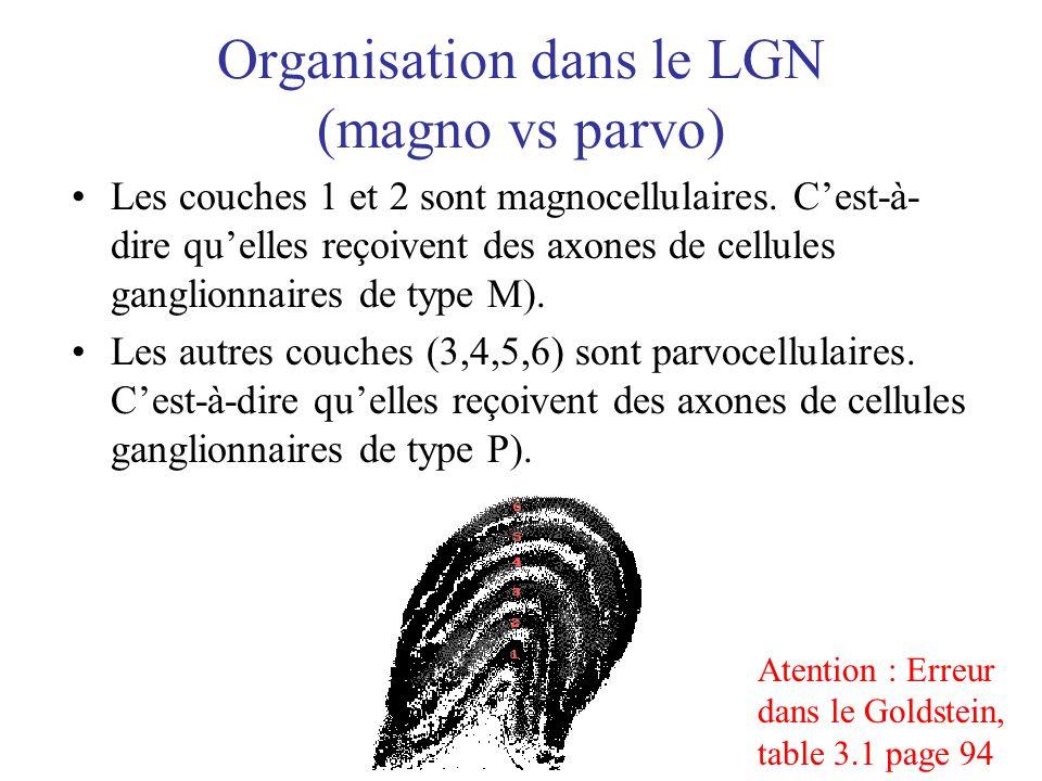 Organisation dans le LGN (magno vs parvo)