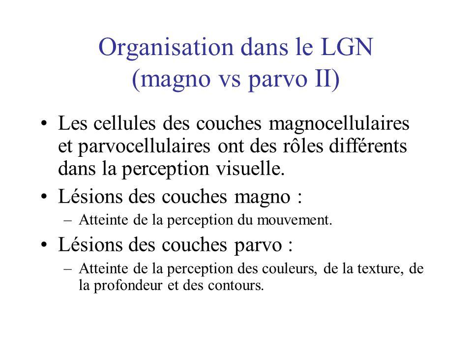 Organisation dans le LGN (magno vs parvo II)