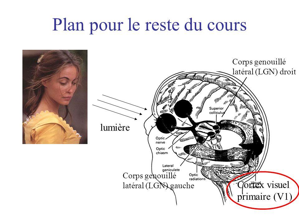 Plan pour le reste du cours