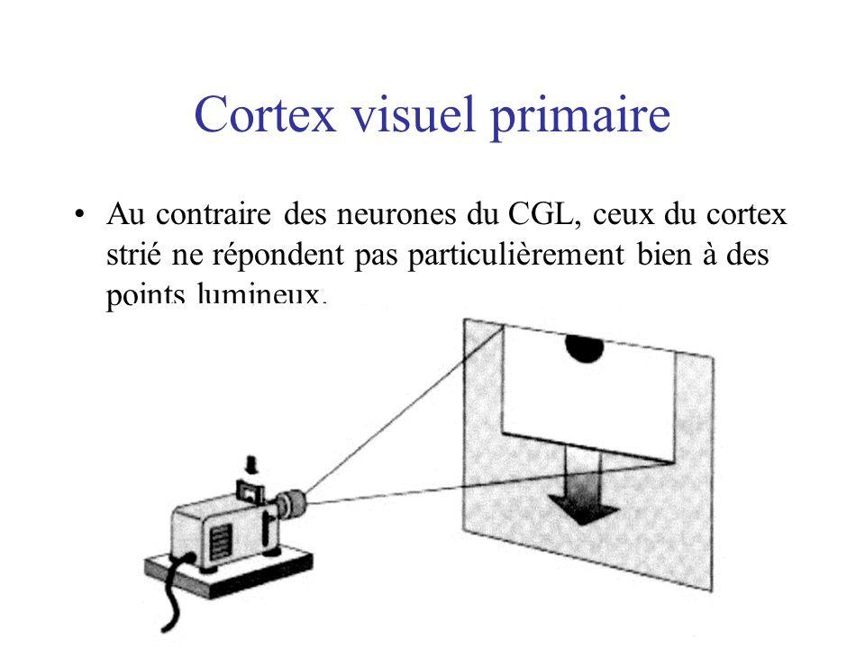 Cortex visuel primaire