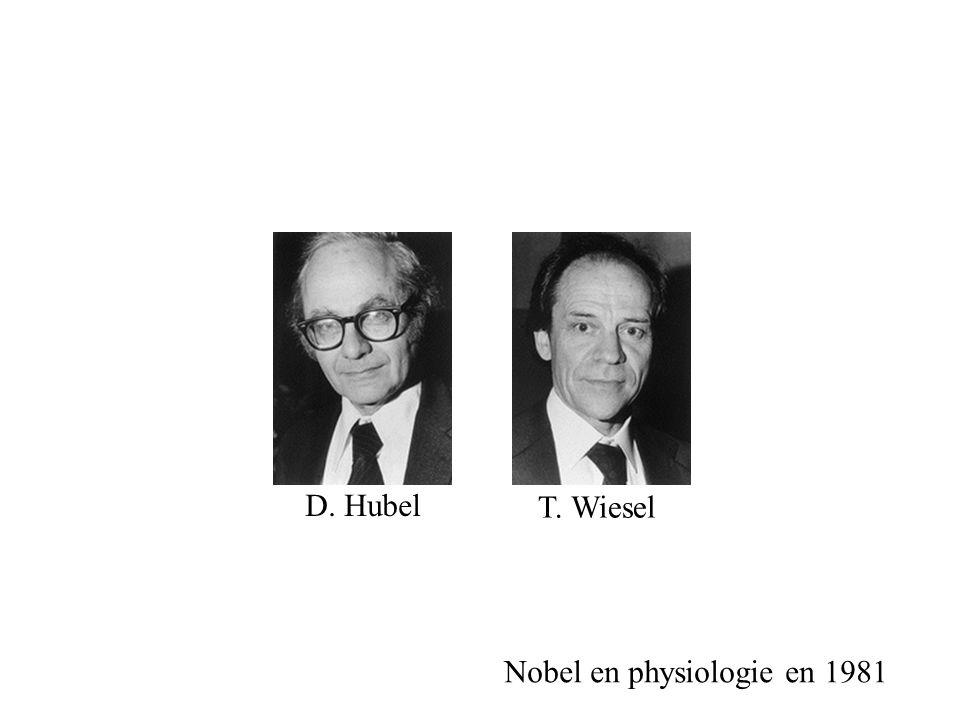 D. Hubel T. Wiesel Nobel en physiologie en 1981