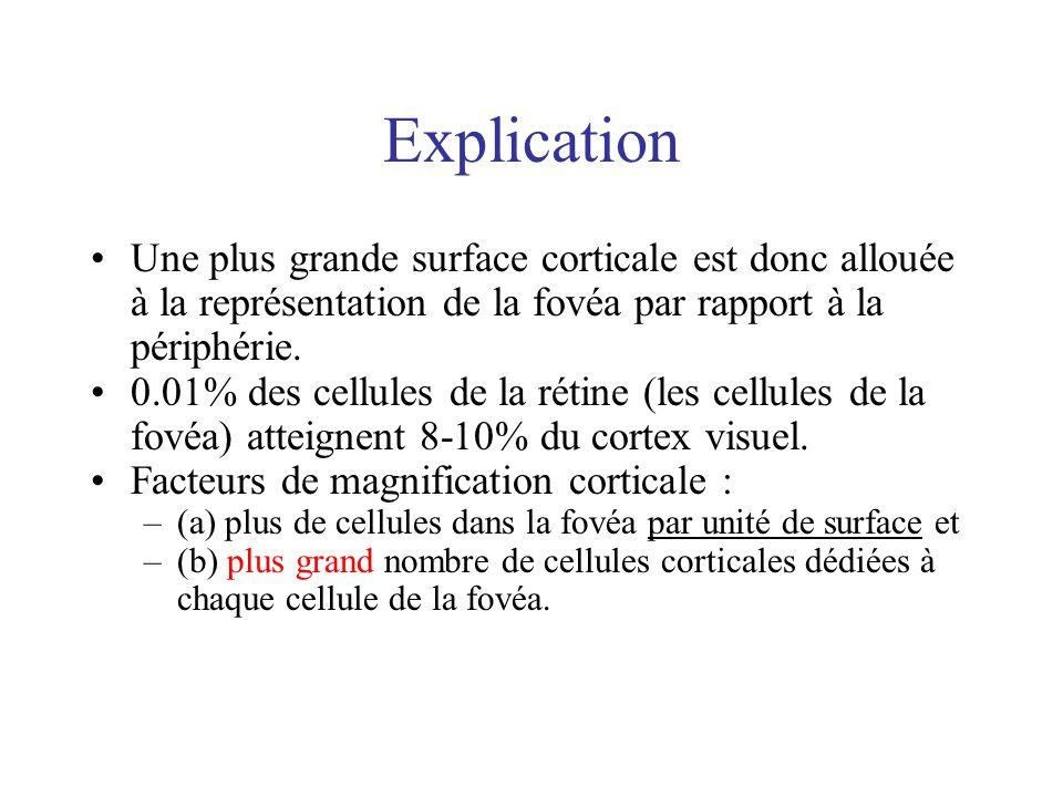 Explication Une plus grande surface corticale est donc allouée à la représentation de la fovéa par rapport à la périphérie.