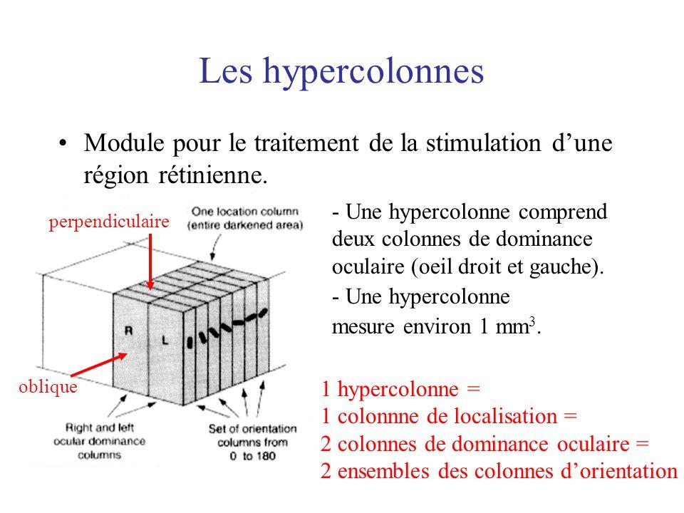 Les hypercolonnes Module pour le traitement de la stimulation d'une région rétinienne.