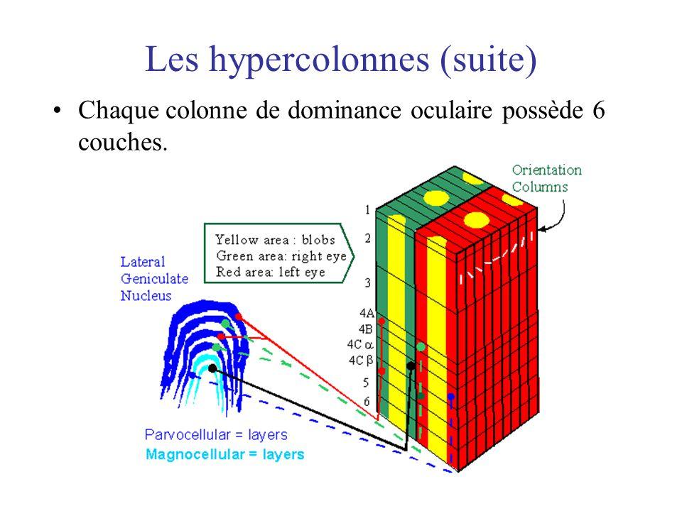Les hypercolonnes (suite)