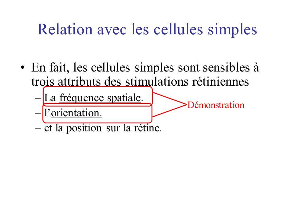 Relation avec les cellules simples