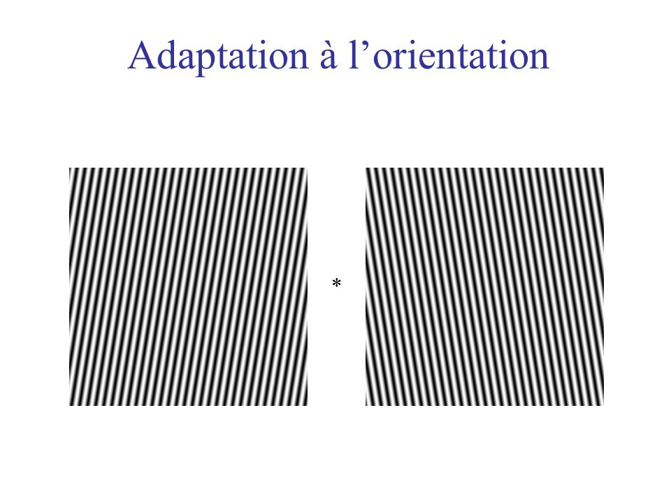 Adaptation à l'orientation
