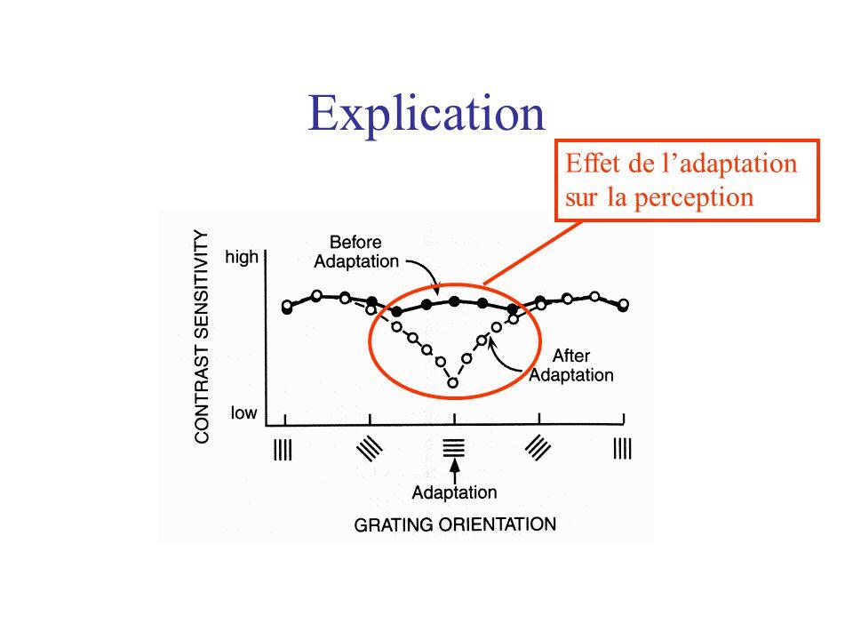 Explication Effet de l'adaptation sur la perception