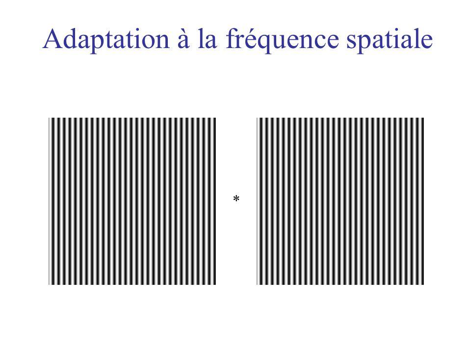 Adaptation à la fréquence spatiale