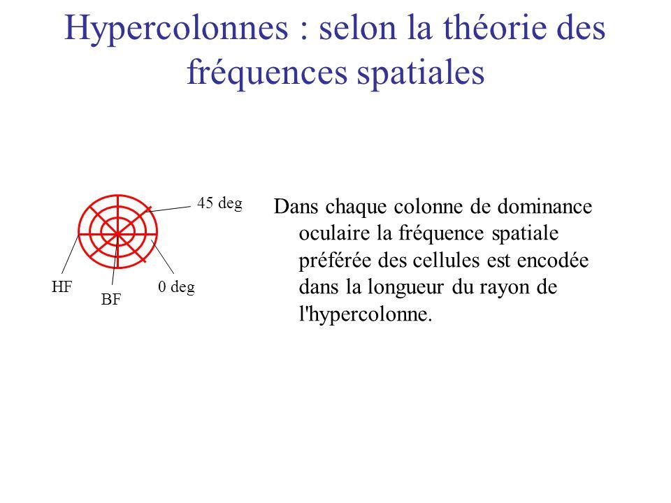 Hypercolonnes : selon la théorie des fréquences spatiales