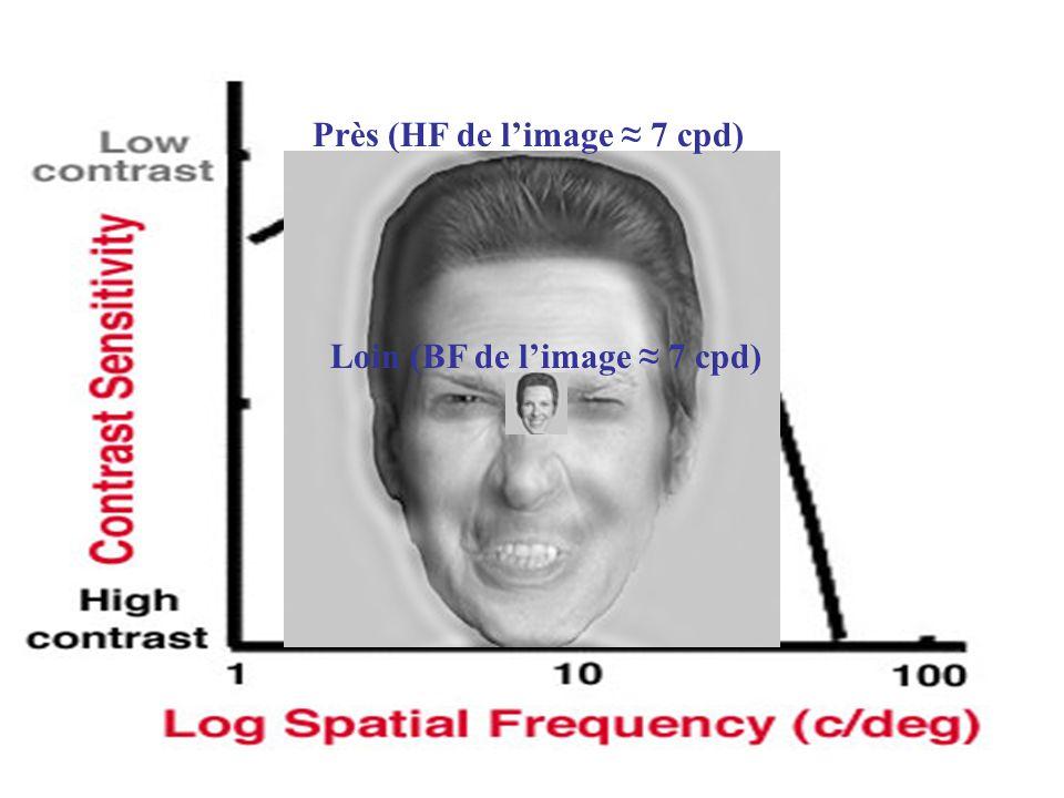 Près (HF de l'image ≈ 7 cpd)
