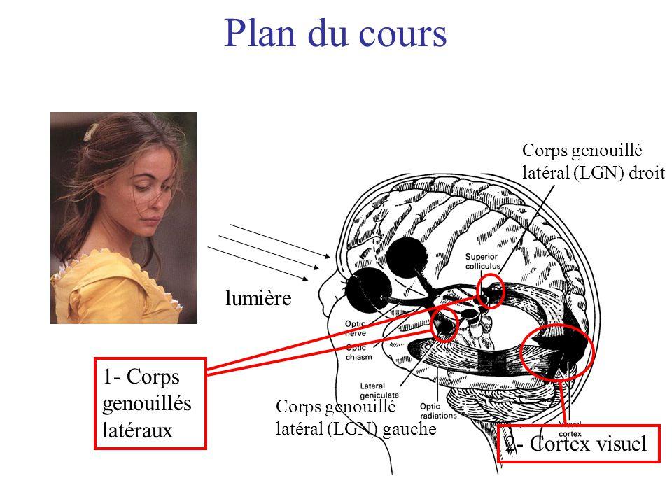 Plan du cours lumière 1- Corps genouillés latéraux 2- Cortex visuel