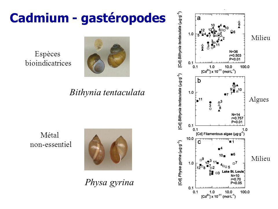 Cadmium - gastéropodes