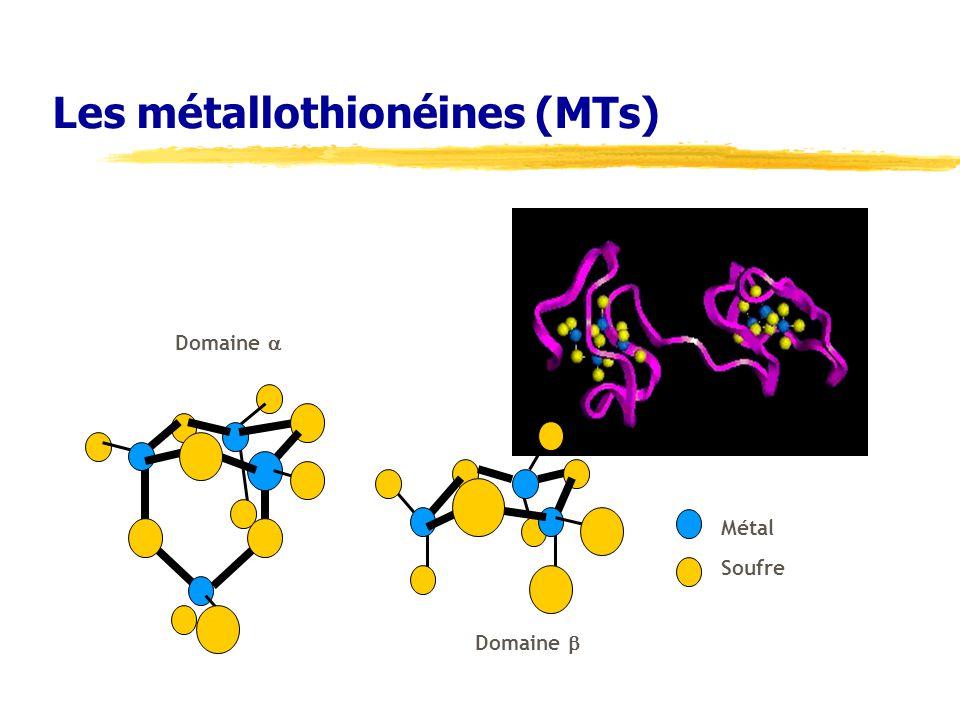 Les métallothionéines (MTs)