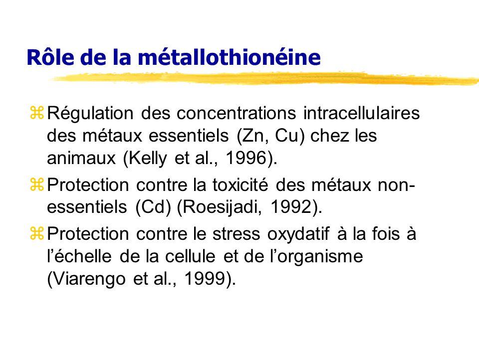 Rôle de la métallothionéine