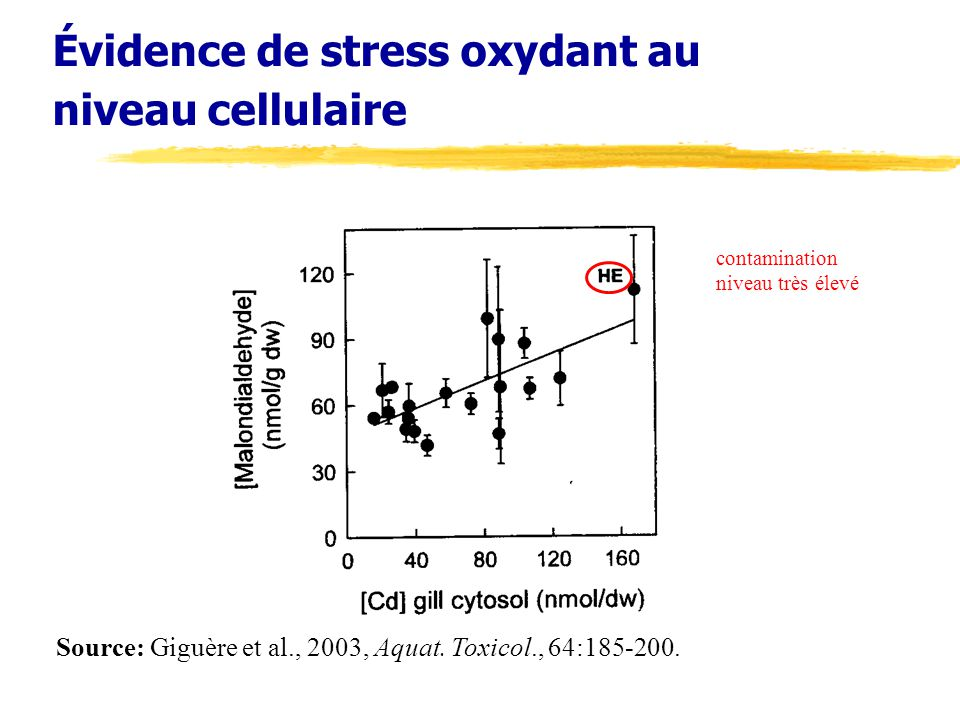 Évidence de stress oxydant au niveau cellulaire