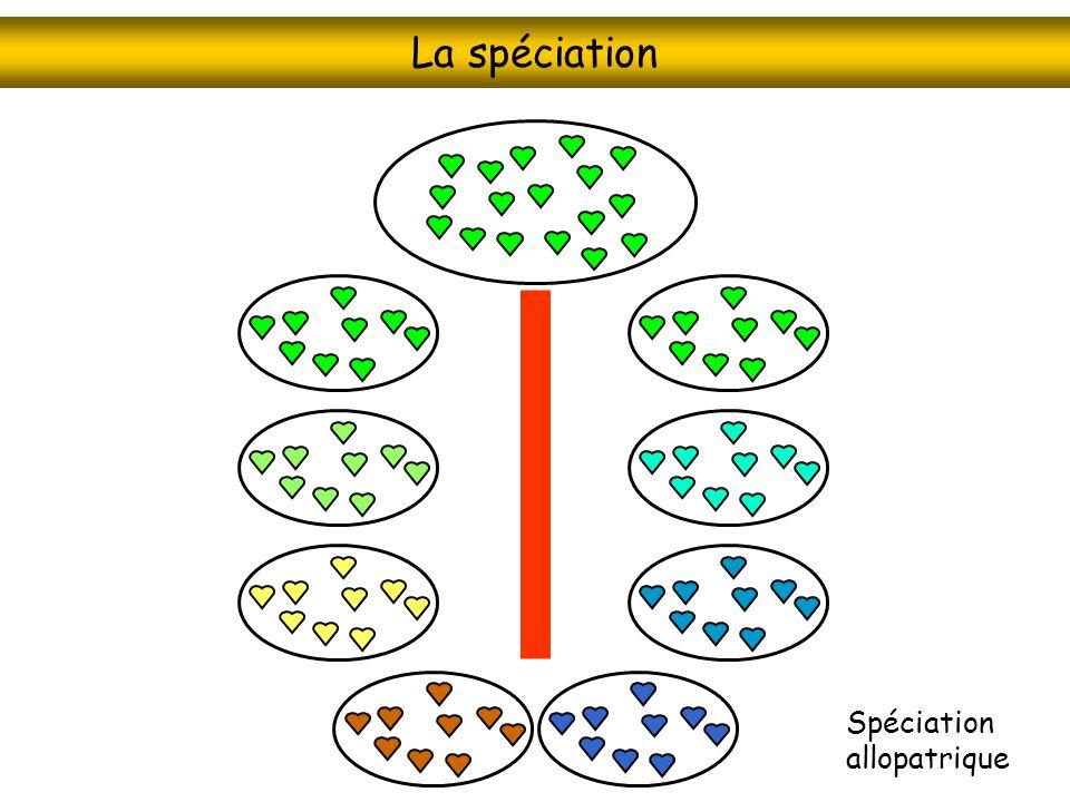 La spéciation Spéciation allopatrique
