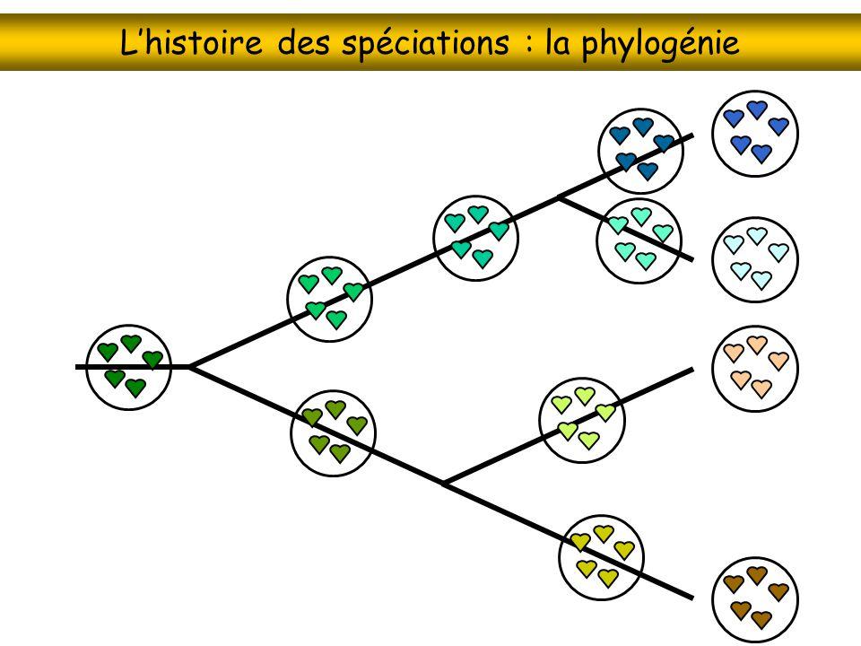 L'histoire des spéciations : la phylogénie