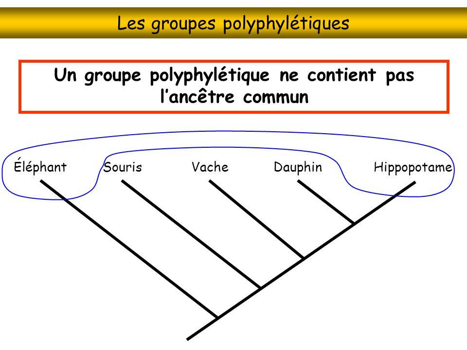 Les groupes polyphylétiques