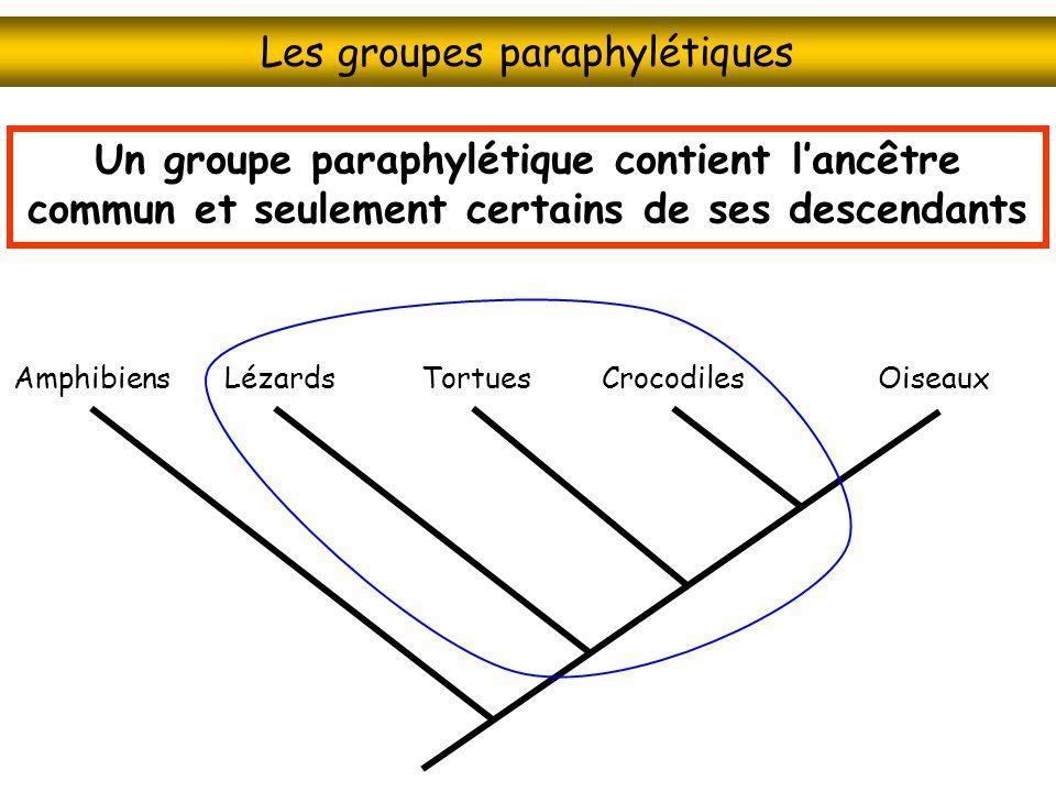 Les groupes paraphylétiques