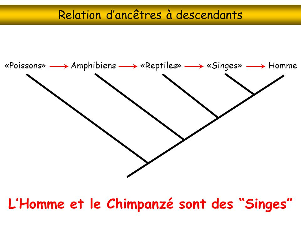 Relation d'ancêtres à descendants