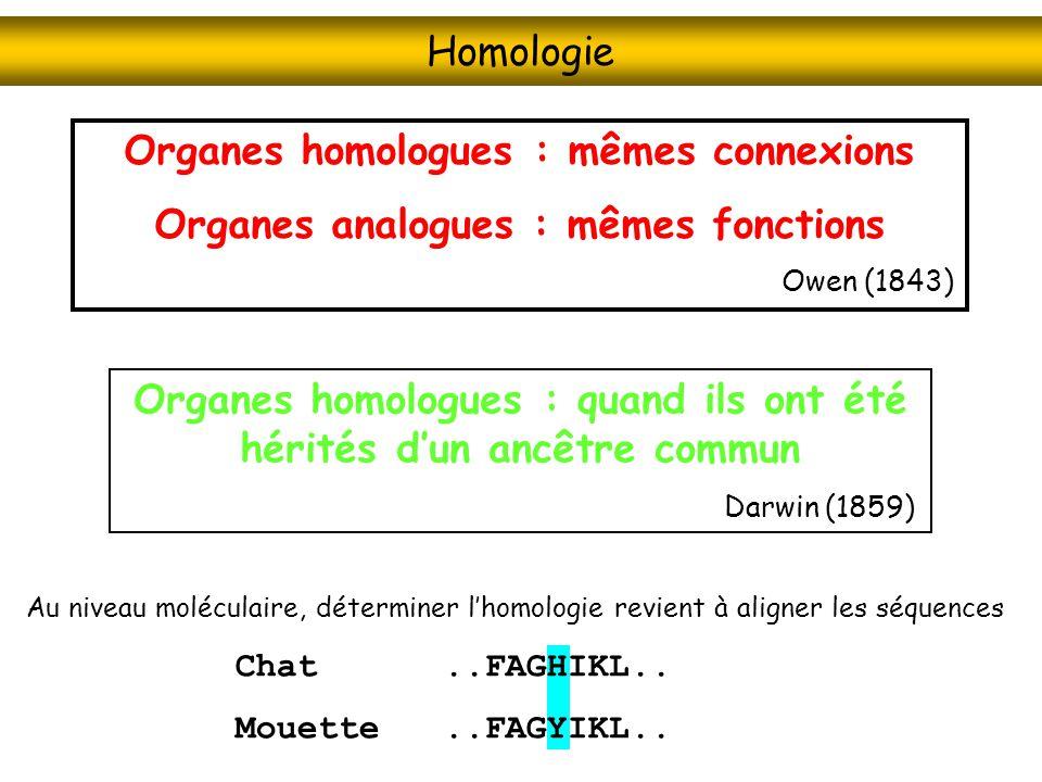 Organes homologues : mêmes connexions